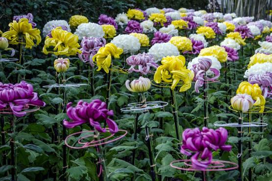 KiKu: The Art of the Japanese Garden at the New York Botanical ...